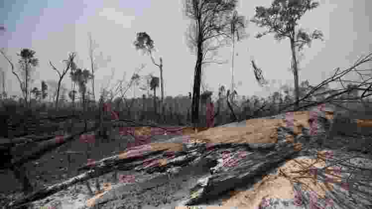 Com a atenção do mundo voltada para a pandemia, haverá menos pressão internacional pela conservação da floresta - Reuters - Reuters