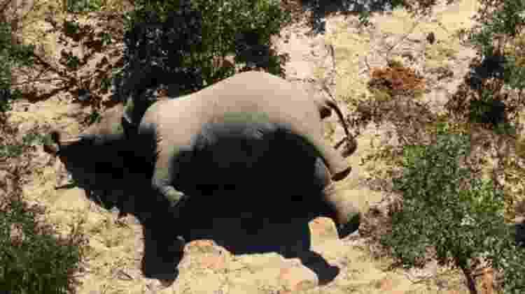 Em maio, o governo de Botsuana descartou que o motivo fosse a caça ilegal  - SUPPLIED - SUPPLIED