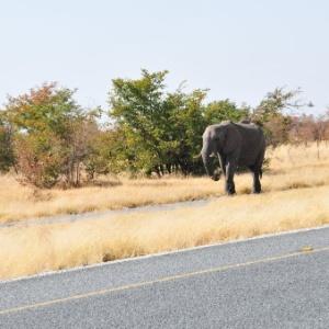 País tem sido prejudicado por caçadores buscando marfim
