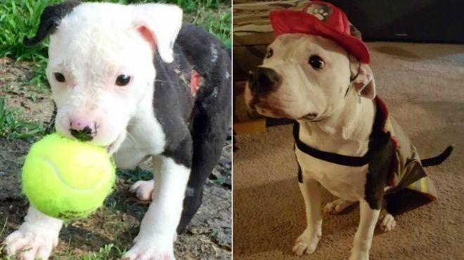 Após sobreviver a incêndio, cãozinho vira bombeiro nos EUA