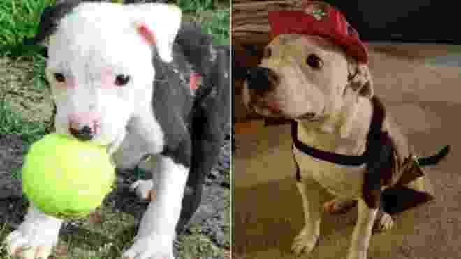 Após sobreviver a incêndio, cãozinho vira bombeiro nos EUA - Reprodução/Facebook