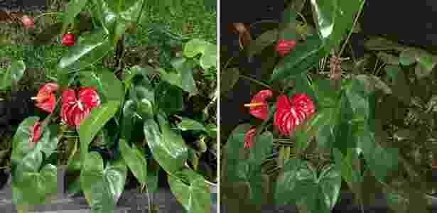 Comparativo entre foto tirada em ambiente noturno sem flash (esq.) e com flash (dir.) - UOL