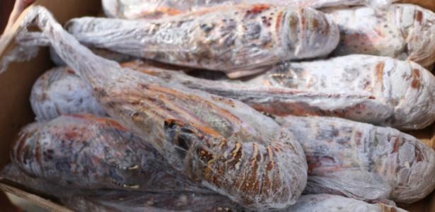 Carga de lagosta roubada estava avaliada em R$ 600 mil, segundo a polícia