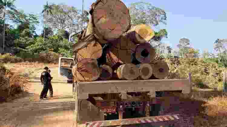 Madeira apreendida pela Força-Tarefa Amazônia em operação feita em Ajuricaba (AM) - Divulgação