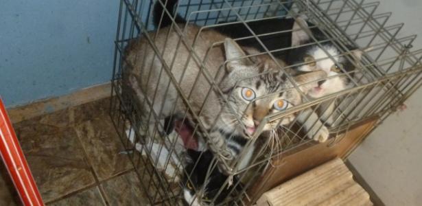 Gatos encontrados pela Polícia Ambiental em situação precária em Bauru (SP)