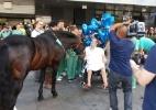 No RS, médicos liberam visita de cavalo a paciente após cirurgia - Valéria Maciel/Divulgação
