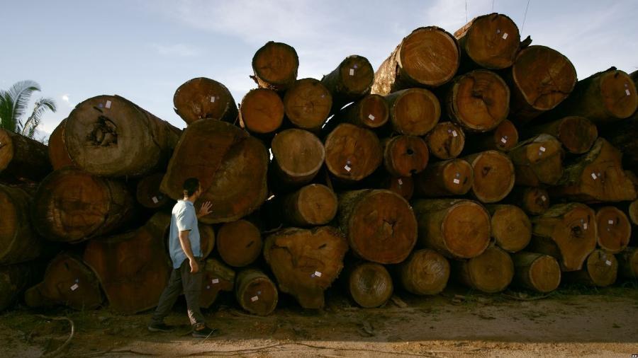 Toras de árvores amazônicas prontas para serem vendidas em depósito próximo ao rio Jamari, em Rondônia - BBC