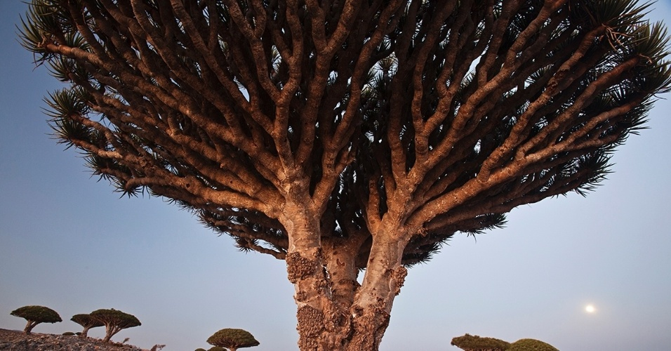 9.fev.2016 - Planalto da ilha Darsah, no arquipélago de Socotorá, no Iêmen, onde dragoeiros crescem em bosques. A ilha é habitada por exóticas formas de vida devido ao clima quente e à ventania