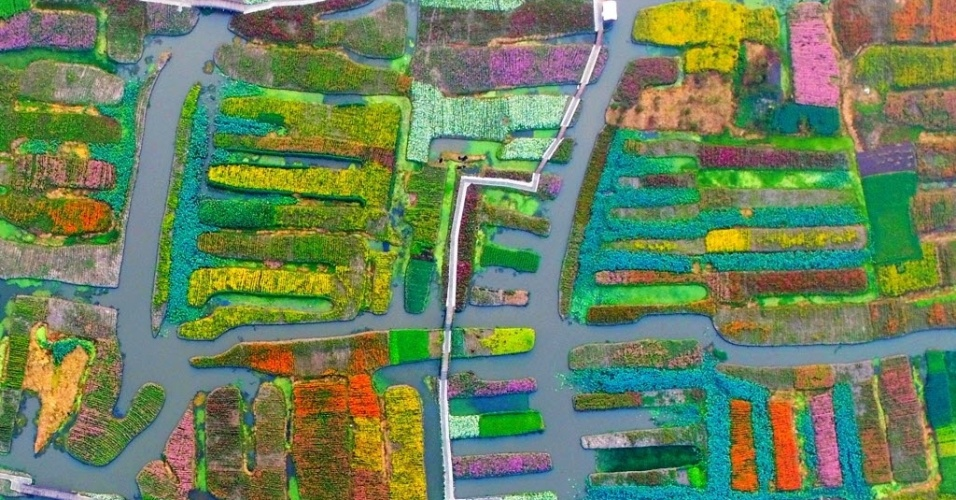 8.set.2016 - Na imagem aérea, áreas de cultivo de flores formam mosaico colorido em  Xinghua, no leste da China