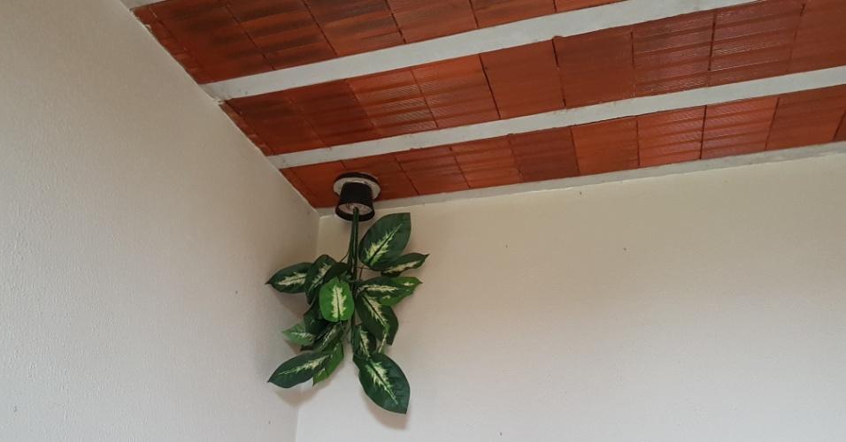 15.dez.2016 - Um vaso de planta devidamente instalado de ponta-cabeça no interior da casa do aposentado Eduardo José Lima, 73, em Ribeirão das Neves, região metropolitana de Belo Horizonte