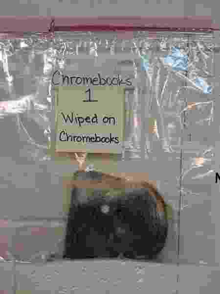 O pão que foi esfregado nos Chromebooks formou mofo - Arquivo pessoal/Jaralee Annice Metcalf/Facebook