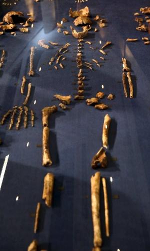 10.set.2015 - Fragmentos de ossos são organizados com partes do esqueleto do Homo Naledi, a espécie recém-descoberta classificada dentro do gênero Homo, ao qual pertence o homem moderno. Juntos, os fragmentos mostram uma surpreendente mistura de características primitivas e semelhantes a da raça humana
