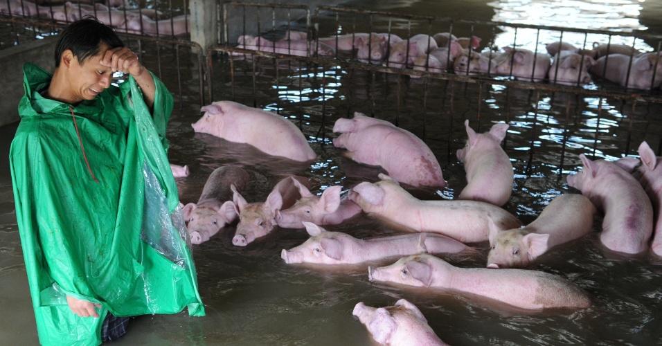 5.jul.2016 - Funcionário de fazenda chinesa olha para criação de porcos que ficou alagada devido às fortes chuvas que atingem a província de Anhui, no leste do país