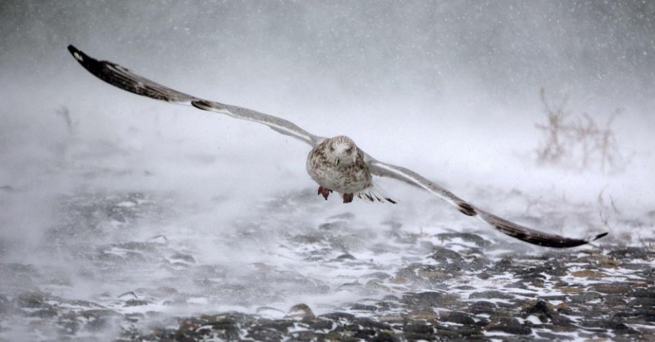 4.jan.2018 - Gaivota levanta voo durante tempestade de neve em Hull, Massachusetts, EUA