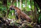 WWF/AFP