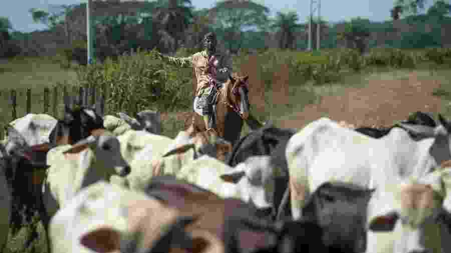 Pecuarista guia gado em um rancho em San Silvestre, no estado de Barinas - Federico Parra/AFP