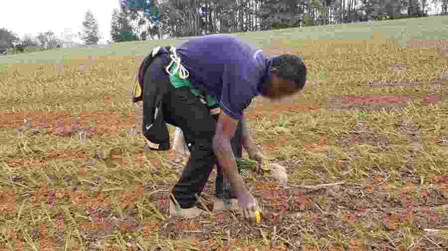 Trabalhadores foram resgatados no plantio de cebola em Ituporanga (SC) - AFT