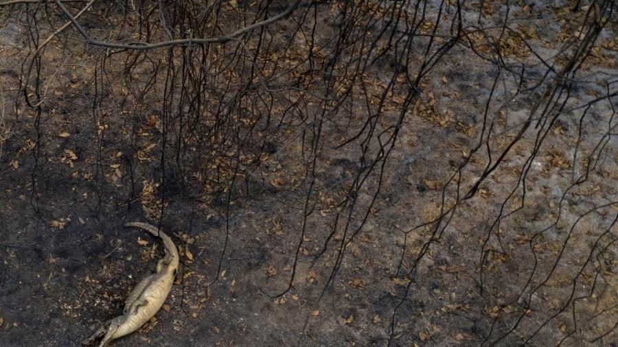 Imagens mostram fogo na região do Pantanal, devastada pelas queimadas que ocorreram em setembro de 2020 - Mauro Pimentel/AFP