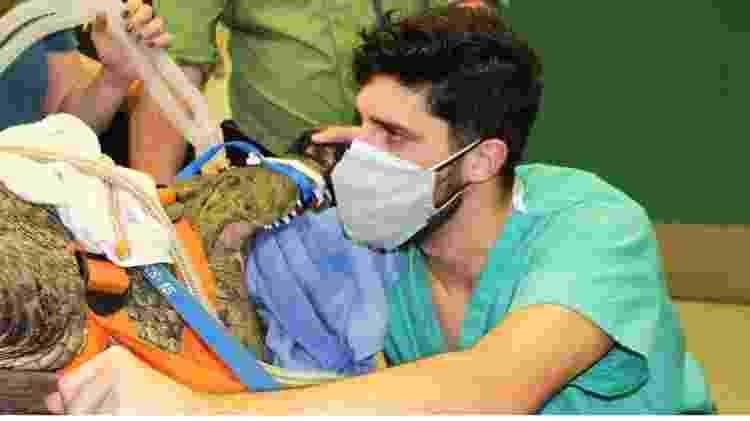 O residente em zoologia Garrett Fraess denta ajudar o crocodilo Anuket - Reprodução/Faculdade de Medicina Veterinária da Universidade da Flórida - Reprodução/Faculdade de Medicina Veterinária da Universidade da Flórida