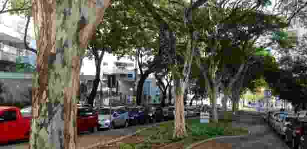 Árvores pau-ferro ao lado de avenida em Belo Horizonte (MG) - Carlos Eduardo Cherem/UOL