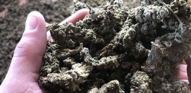 A Albânia se tornou o maior produtor de maconha a céu aberto da Europa