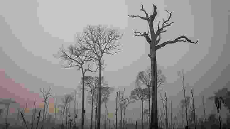 Floresta Nacional do Jamanxim, onde a Câmara dos Deputados votou para reduzir a área de proteção  - Vinícius Mendonça/Ibama