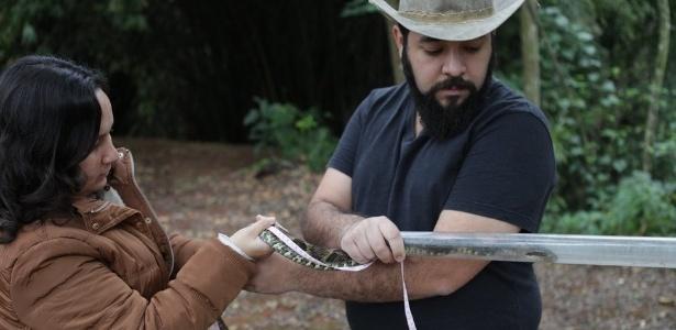 Jararacas entregues no Butantan mediam por volta de 1,5 metro, quando a média da espécie é de cerca de um metro