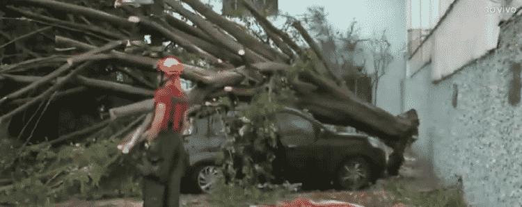 Uma árvore caiu sobre carro após chuvas em São Paulo - Reprodução/TV Band - Reprodução/TV Band