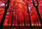 Uma árvore faz barulho ao cair se ninguém estiver lá para escutar? A resposta da ciência e da filosofia - Getty Images