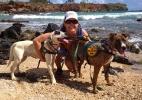 Reprodução/Kauai Humane Society