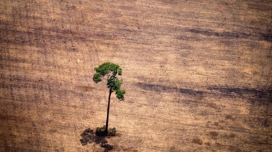 No Brasil, 1,3 milhões de hectares de florestas primárias - que nunca haviam sofrio interferência humana - desapareceram em 2018 - Getty Images
