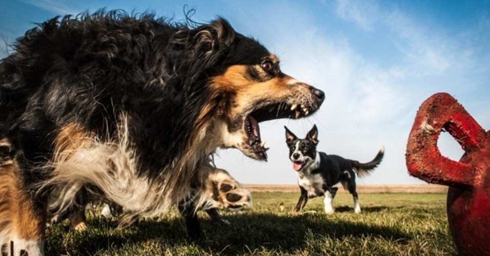 21.jul.2015 - Esse não é um cão monstro gigante comendo outro cachorro. O totó só estava latindo no exato momento em que outro apareceu atrás dele. É tudo culpa da perspectiva