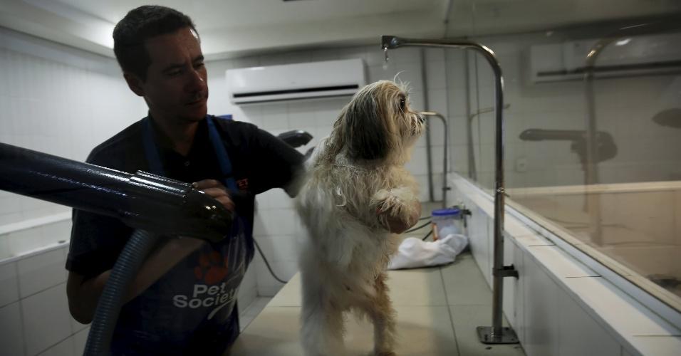 """27.fev.2016 - Um cão da raça Lhasa apso, de origem tibetana, tem os pelos secados por funcionário de pet shop especializado nos """"glamudogs"""", que fica no shopping Cidade Jardim, em São Paulo"""