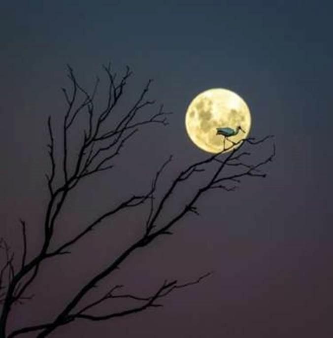 1º.ago.2016 - Esta foto que mostra a silhueta de um pássaro em contraste com o brilho da Lua cheia é uma das imagens pré-selecionadas para a competição Insight Astronomy Photographer of the Year 2016. A foto foi tirada em Hawke's Bay, na Nova Zellândia, por Andrew Caldwell