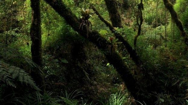 Floresta onde o sapinho-da-montanha 'coloratus' foi encontrado pelos pesquisadores brasileiros
