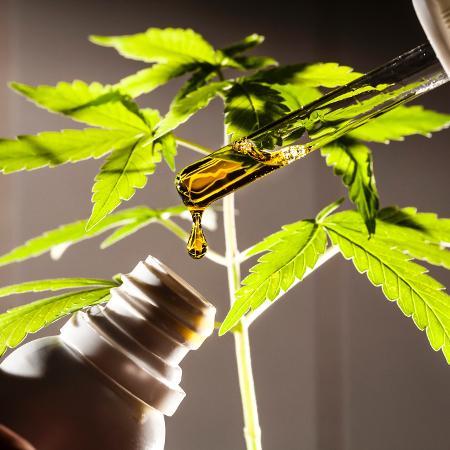 Imagem da Cannabis Canabidiol - Fernando Moraes