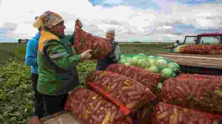 Maior parte das terras usadas para agricultura é propriedade do Estado e emprega quase 10% da população de Belarus - Getty Images - Getty Images