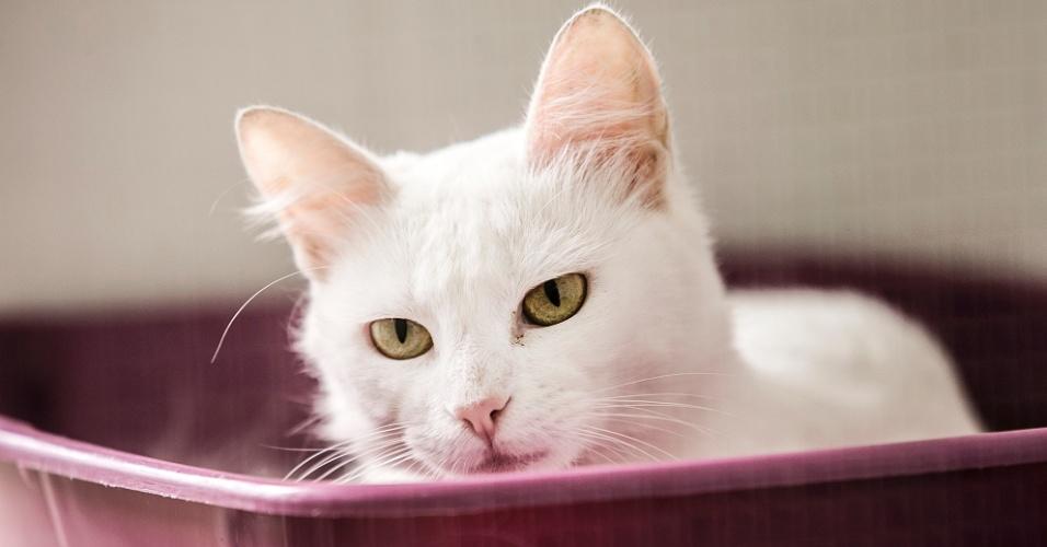 """Bibi tem aproximadamente 1 ano. Já foi adotada, mas acabou devolvida por não se dar bem com outros gatos da casa. É indicada para apartamentos. """"Gatos brancos não podem ficar muito tempo expostos ao sol para prevenir câncer de pele. Em geral, os animais de pelagem branca a gente libera apenas para apartamentos por conta desses riscos"""", diz Leda Schoendorfer"""