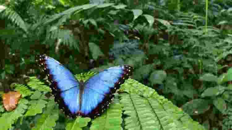 Os pesquisadores encontraram 246 espécies de borboletas e mariposas - TROND LARSEN