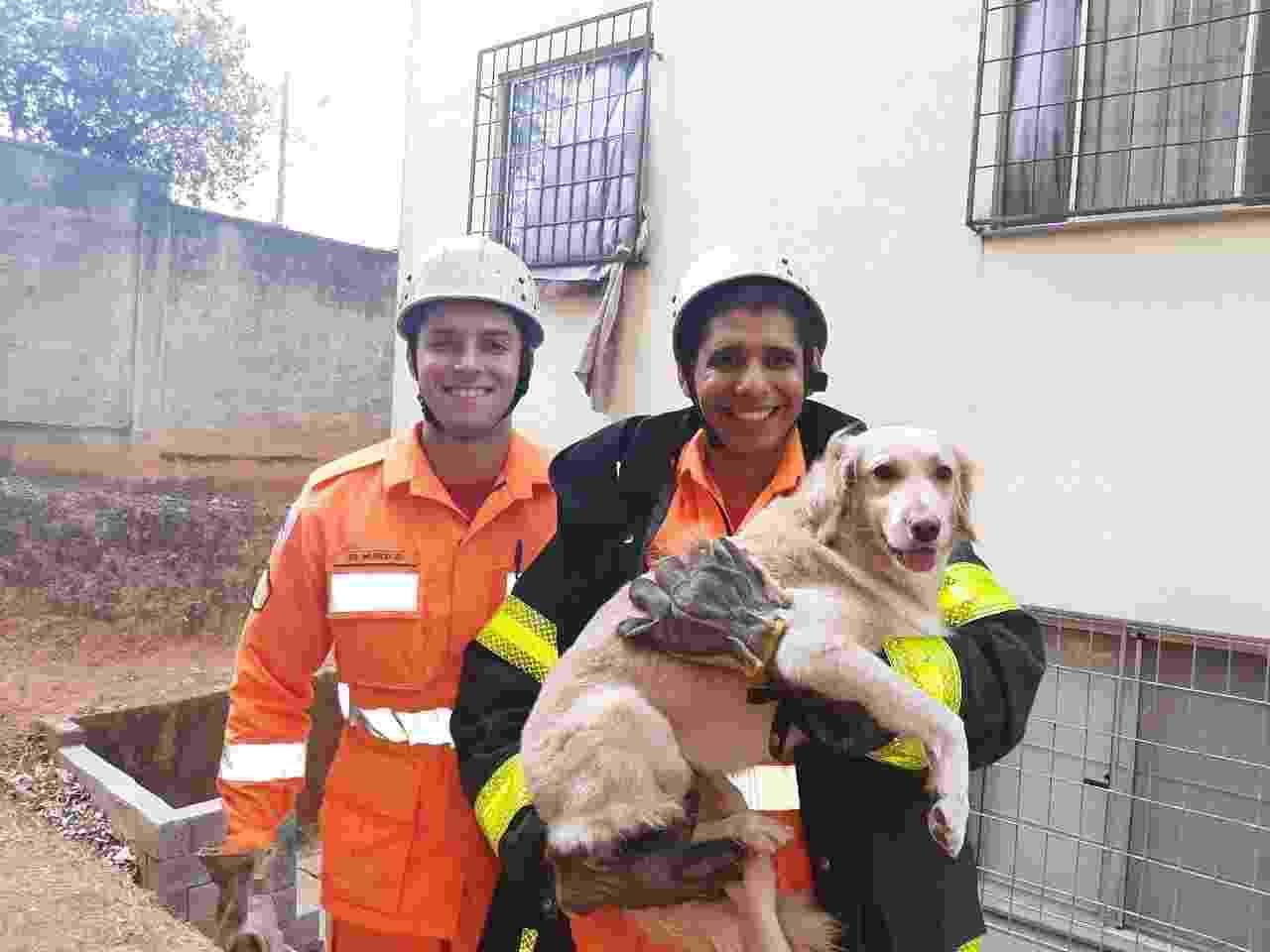 Bombeiros resgata cadela que ficou presa em grade de casa em Belo Horizonte, capital de Minas Gerais. - Divulgação/CBMMG
