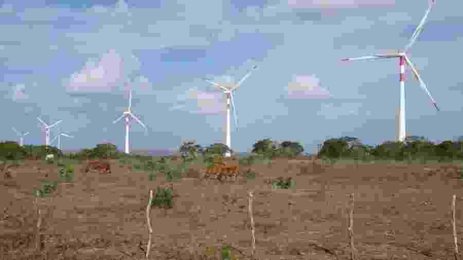 Nordeste é responsável por 86% da produção de energia eólica do Brasil - Marilia Barros