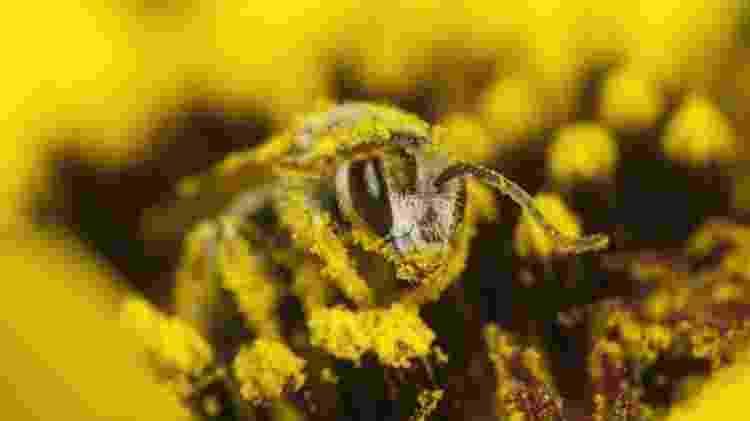 No cálculo de Constanza, o valor da polinização é o custo que é evitado quando as abelhas fazem esse serviço para nós, 'gratuitamente' - Getty Images/BBC - Getty Images/BBC
