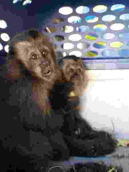 macacos - Divulgação/ Polícia Ambiental - Divulgação/ Polícia Ambiental