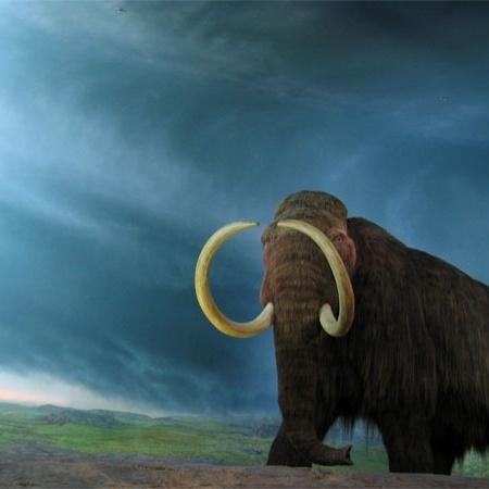 mamute-lanoso - rpongsaj / Wikimedia Commons