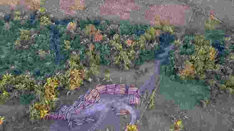 Pesquisadores fizeram monitoramento e análise de dados por quatro anos para apresentar resultados sobre desmatamento na Amazônia - FELIPE WERNECK/IBAMA