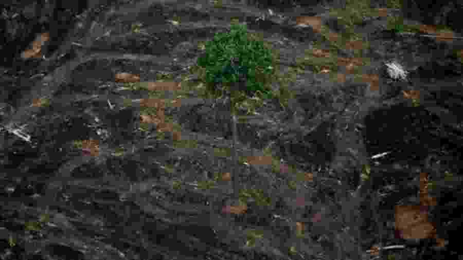Área desmatada perto de Porto Velho; taxa de desmatamento anunciada nesta segunda-feira é a maior desde 2008 - Bruno Kelly/Reuters