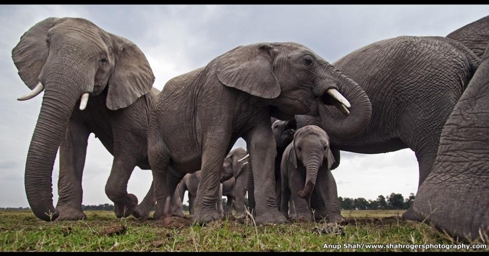 """11.mar.2016 - """"Maravilhas da Natureza: A Inteligência da Criação"""" fica na galeria Oberhausen Gasometer até o dia 11 de dezembro. Na imagem acima, uma manada de elefantes mata a sede na Reserva Nacional Maasai Mara, no Quênia, em uma foto feita por Anup Shah em julho de 2011"""