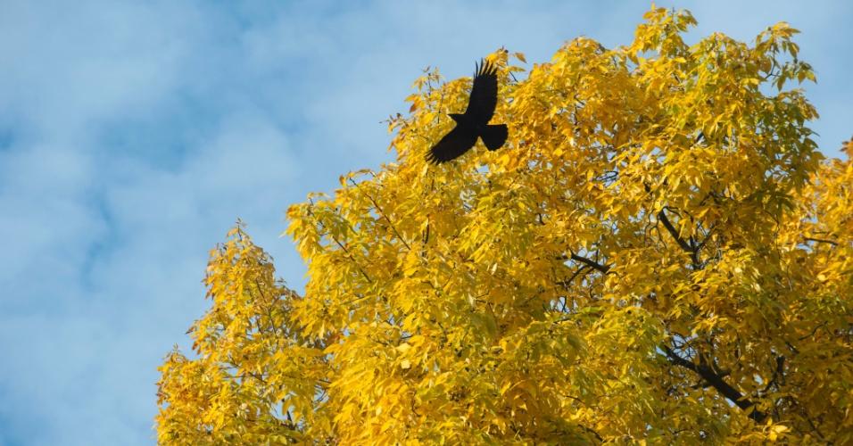 28.out.2016 - Corvo voa na frente de uma árvore em parque de Stuttgart, na Alemanha