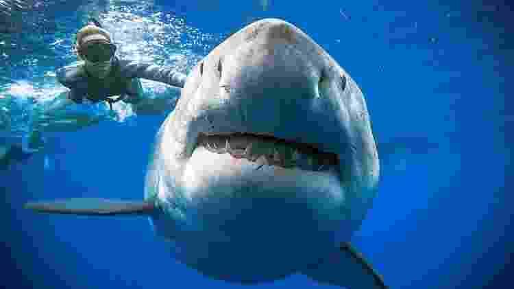 A fotógrafa Kimberly Jeffries foi uma das pessoas que chegaram muito perto deste que pode ser o maior tubarão-branco já registrado, apelidado de Deep Blue (azul profundo) - Reuters - Reuters