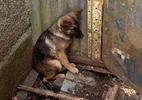 Polícia resgata 197 animais em condições de maus-tratos em criadouro no PR - Reprodução/Twitter/@MatheusLaiola